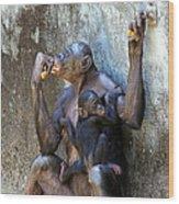 Bonobo 1 Wood Print