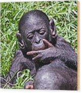 Bonobo 2 Wood Print