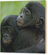 Bonobo Orphans Hugging Wood Print