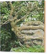 Bonsai Root And Stone Wood Print