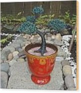 Bonsai Tree Medium Red Glass Vase Planter Wood Print