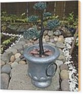 Bonsai Tree Medium Silver Vase Wood Print
