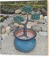 Bonsai Tree Small Round Planter Blue Wood Print