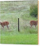 Bookend Twin Bucks Wood Print