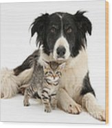 Border Collie And Kitten Wood Print
