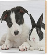 Border Collie Pup And Dutch Rabbit Wood Print