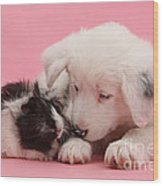 Border Collie Pup And Guinea Pig Wood Print