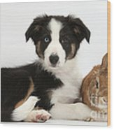 Border Collie Pup And Netherland-cross Wood Print