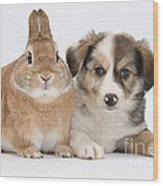 Border Collie Pup And Sandy Wood Print