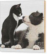 Border Collie Pup And Tuxedo Kitten Wood Print