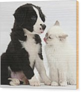 Border Collie Pup And White Kitten Wood Print