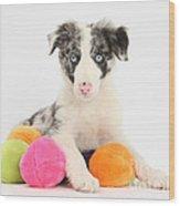 Border Collie Pup Wood Print