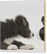 Border Collie Puppy And Rabbit Wood Print