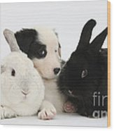 Border Collie Pups With Black Rabbit Wood Print