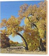 Bosque Fall Wood Print