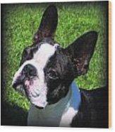Boston Terrier Two Wood Print