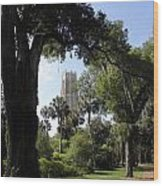 Botanical Gardens Florida Wood Print