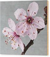 Botanical II Wood Print