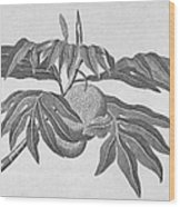 Botany: Breadfruit Tree Wood Print