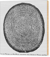 Botany:  Fir Tree Trunk Wood Print