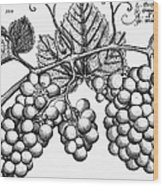 Botany: Grapes Wood Print by Granger