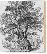 Botany: Oak Tree Wood Print