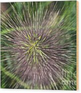 Bottle Brush By Nature Wood Print