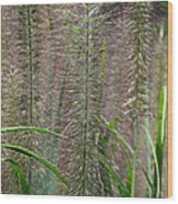 Bottle Brush Grass Wood Print