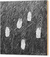 Bottlebrush Plant B W Wood Print