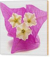 Bougainvillea Flower Wood Print