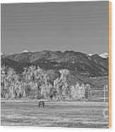 Boulder County Colorado Front Range Panorama With Horses Bw Wood Print