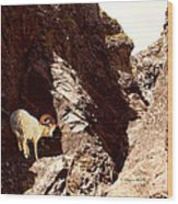 Boulder Fossile Expedition Wood Print