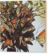 Bouquet Of Butterflies Wood Print