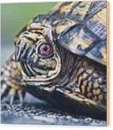 Box Turtle 1 Wood Print