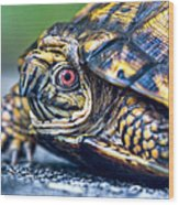 Box Turtle 2 Wood Print