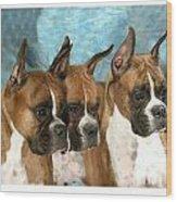 Boxer 655 Wood Print