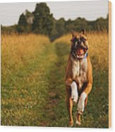 Boxer Dog Running Happily Through Field Wood Print by Stephanie McDowell