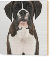 Boxer Pup Wood Print by Mark Taylor