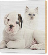 Boxer Puppy And Blue-point Kitten Wood Print