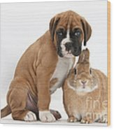 Boxer Puppy And Netherland-cross Rabbit Wood Print by Mark Taylor