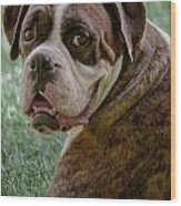 Boxer Smiles Wood Print by DigiArt Diaries by Vicky B Fuller