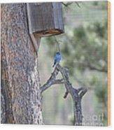Boy Blue Wood Print