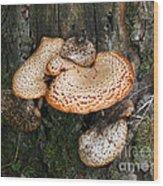Bracket Family Wood Print