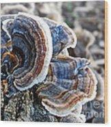 Bracket Fungi - Fungus Wood Print