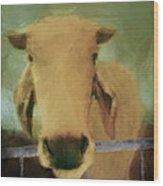 Brahma Cow Greeting Wood Print