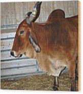 brahma Cow Wood Print