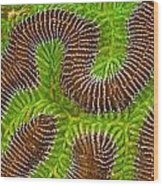 Brain Coral Wood Print