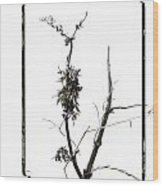 Branch Of Dried Out Flowers. Wood Print