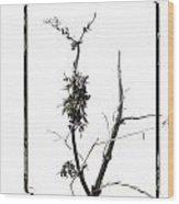 Branch Of Dried Out Flowers. Wood Print by Bernard Jaubert