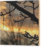 Branches in January Wood Print